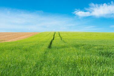 小麦の奴隷になってはいけません!? 習慣性に気を付けましょう